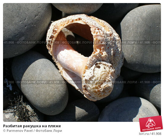 Разбитая ракушка на пляже, фото № 41908, снято 23 марта 2007 г. (c) Parmenov Pavel / Фотобанк Лори