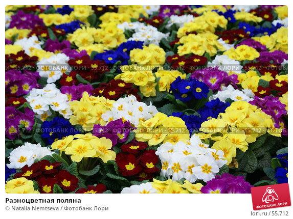 Разноцветная поляна, эксклюзивное фото № 55712, снято 24 февраля 2007 г. (c) Natalia Nemtseva / Фотобанк Лори