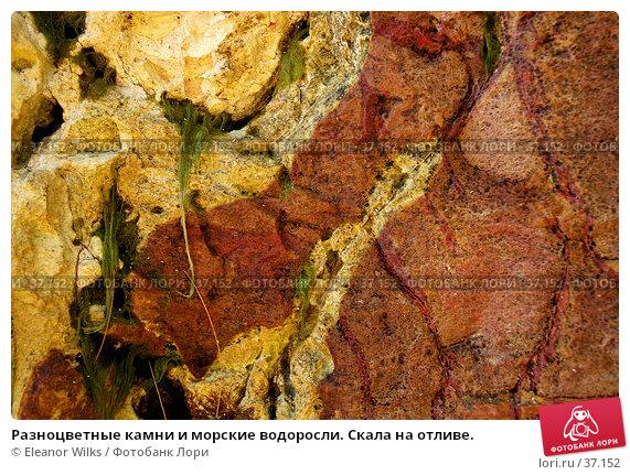 Разноцветные камни и морские водоросли. Скала на отливе., фото № 37152, снято 24 мая 2007 г. (c) Eleanor Wilks / Фотобанк Лори