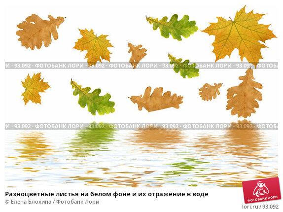 Разноцветные листья на белом фоне и их отражение в воде, фото № 93092, снято 22 сентября 2007 г. (c) Елена Блохина / Фотобанк Лори