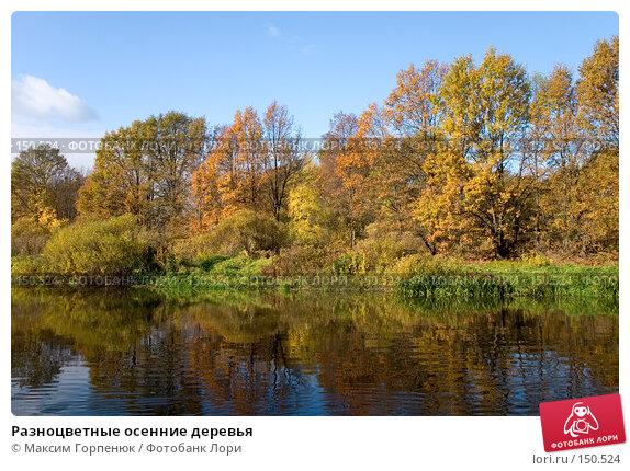 Разноцветные осенние деревья, фото № 150524, снято 20 октября 2005 г. (c) Максим Горпенюк / Фотобанк Лори