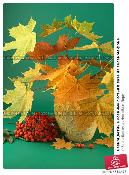 Разноцветные осенние листья в вазе на зеленом фоне, фото № 313476, снято 12 сентября 2007 г. (c) Елена Блохина / Фотобанк Лори