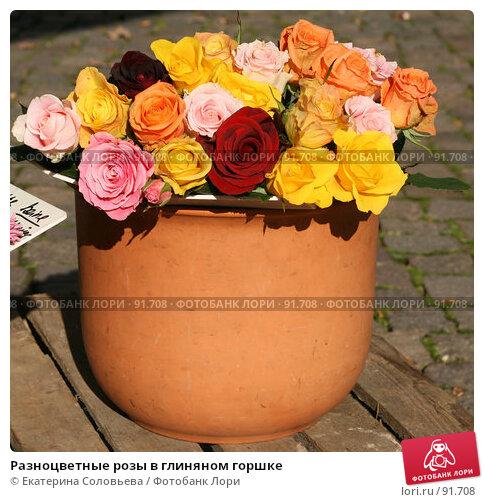 Купить «Разноцветные розы в глиняном горшке», фото № 91708, снято 2 октября 2007 г. (c) Екатерина Соловьева / Фотобанк Лори