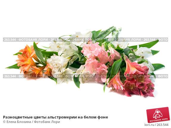 Разноцветные цветы альстромерии на белом фоне, фото № 263544, снято 25 апреля 2008 г. (c) Елена Блохина / Фотобанк Лори
