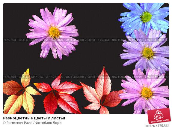 Купить «Разноцветные цветы и листья», фото № 175364, снято 11 января 2008 г. (c) Parmenov Pavel / Фотобанк Лори