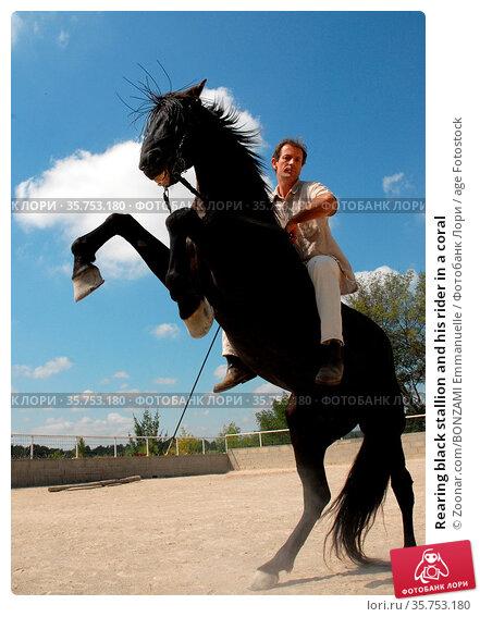 Rearing black stallion and his rider in a coral. Стоковое фото, фотограф Zoonar.com/BONZAMI Emmanuelle / age Fotostock / Фотобанк Лори
