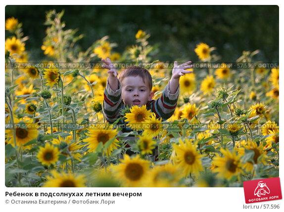 Ребенок в подсолнухах летним вечером, фото № 57596, снято 3 августа 2006 г. (c) Останина Екатерина / Фотобанк Лори