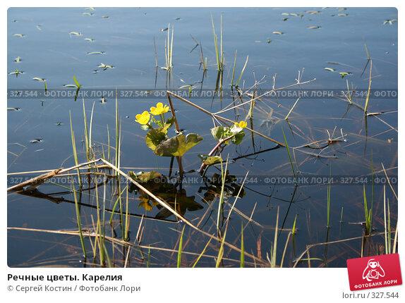 Речные цветы. Карелия, фото № 327544, снято 24 мая 2008 г. (c) Сергей Костин / Фотобанк Лори