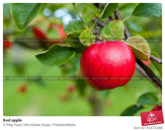 Red apple. Стоковое фото, фотограф Filip Fuxa / PantherMedia / Фотобанк Лори