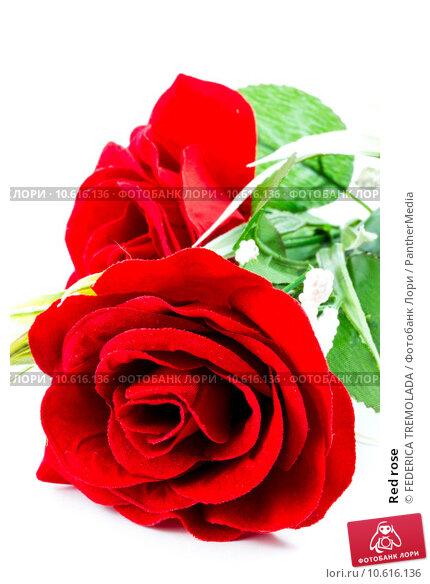 Red rose. Стоковое фото, фотограф FEDERICA TREMOLADA / PantherMedia / Фотобанк Лори