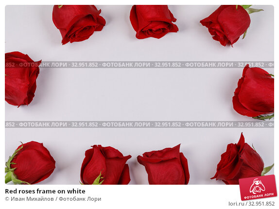 Red roses frame on white. Стоковое фото, фотограф Иван Михайлов / Фотобанк Лори
