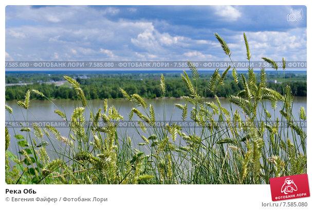 Река Обь. Стоковое фото, фотограф Евгения Файфер / Фотобанк Лори