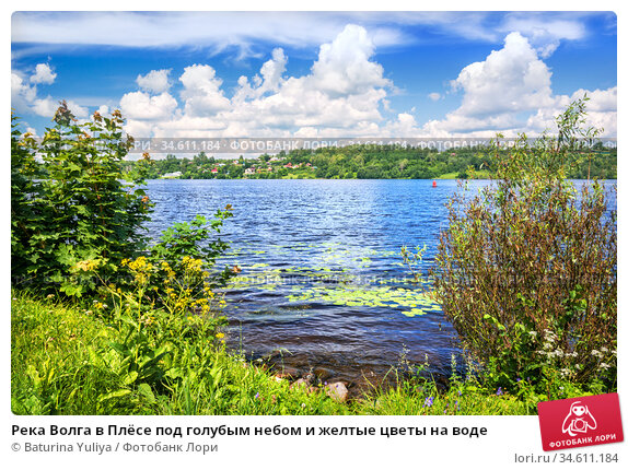 Река Волга в Плёсе под голубым небом и желтые цветы на воде. Стоковое фото, фотограф Baturina Yuliya / Фотобанк Лори