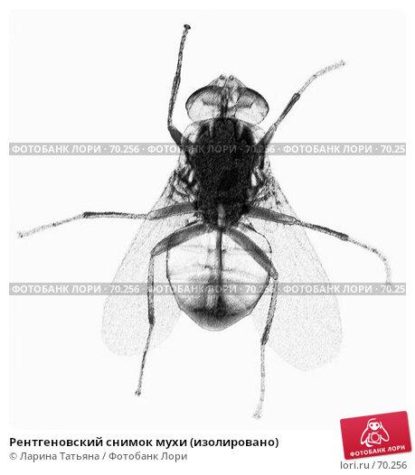 Рентгеновский снимок мухи (изолировано), фото № 70256, снято 29 мая 2017 г. (c) Ларина Татьяна / Фотобанк Лори