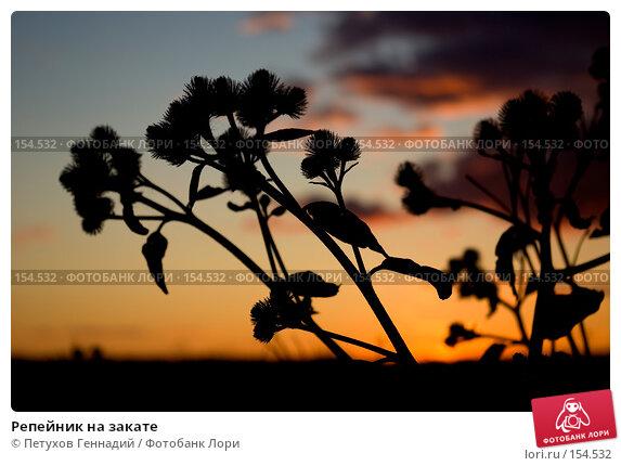 Купить «Репейник на закате», фото № 154532, снято 30 июня 2007 г. (c) Петухов Геннадий / Фотобанк Лори