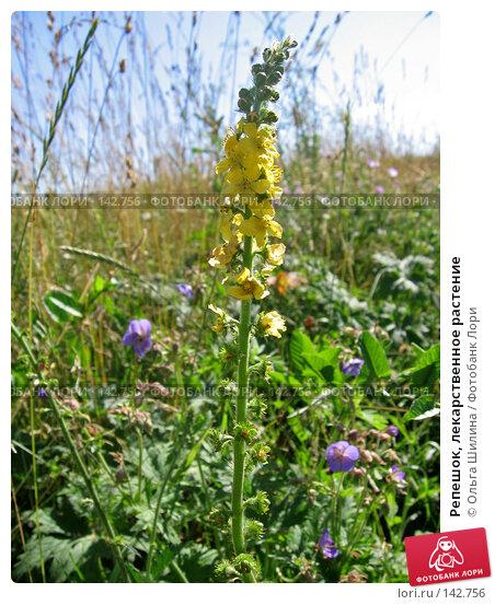 Репешок, лекарственное растение, фото № 142756, снято 16 июля 2007 г. (c) Ольга Шилина / Фотобанк Лори