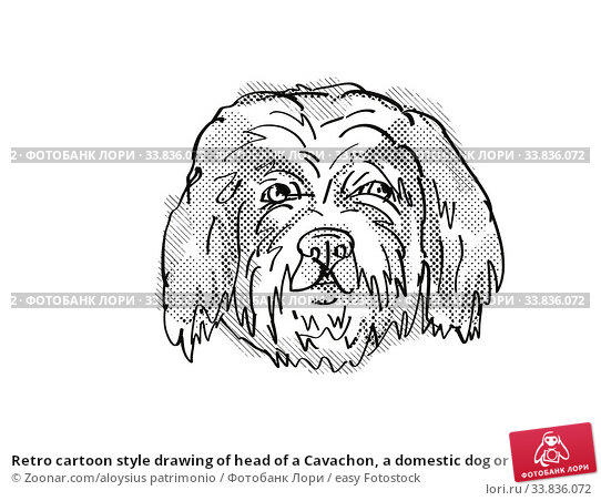 Купить «Retro cartoon style drawing of head of a Cavachon, a domestic dog or canine breed on isolated white background done in black and white.», фото № 33836072, снято 1 июня 2020 г. (c) easy Fotostock / Фотобанк Лори