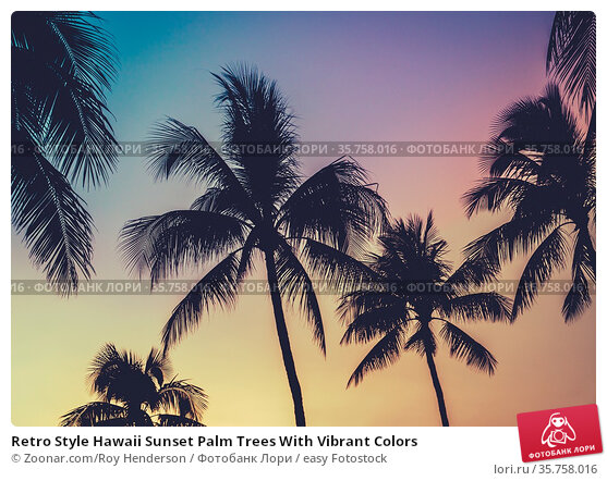 Retro Style Hawaii Sunset Palm Trees With Vibrant Colors. Стоковое фото, фотограф Zoonar.com/Roy Henderson / easy Fotostock / Фотобанк Лори