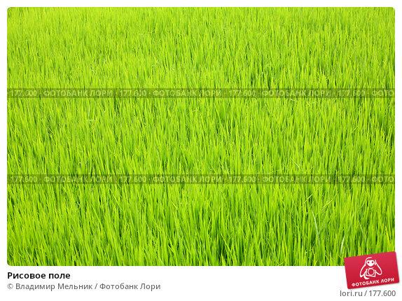 Рисовое поле, фото № 177600, снято 19 июля 2006 г. (c) Владимир Мельник / Фотобанк Лори