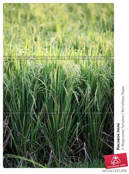 Рисовое поле, фото № 221076, снято 23 октября 2007 г. (c) Морозова Татьяна / Фотобанк Лори