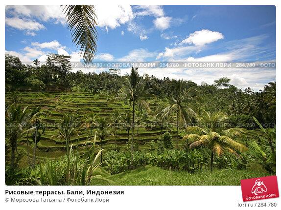 Купить «Рисовые террасы. Бали, Индонезия», фото № 284780, снято 24 февраля 2008 г. (c) Морозова Татьяна / Фотобанк Лори