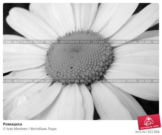 Купить «Ромашка», фото № 321924, снято 14 июня 2008 г. (c) Ivan Markeev / Фотобанк Лори