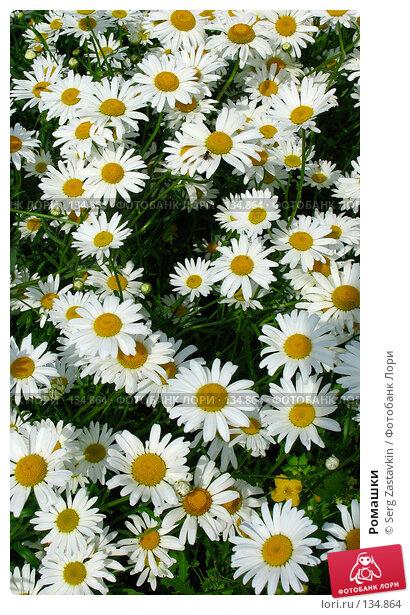 Ромашки, фото № 134864, снято 28 июня 2005 г. (c) Serg Zastavkin / Фотобанк Лори