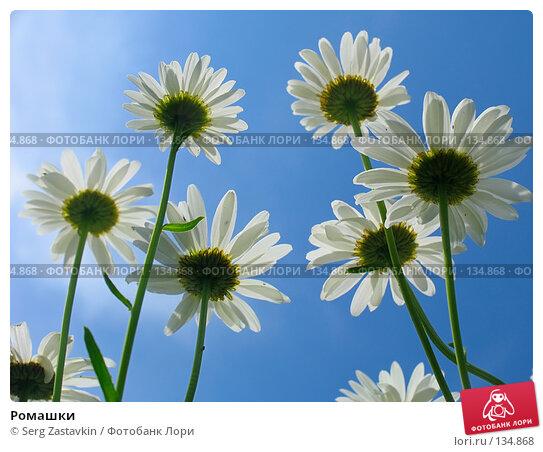 Ромашки, фото № 134868, снято 28 июня 2005 г. (c) Serg Zastavkin / Фотобанк Лори