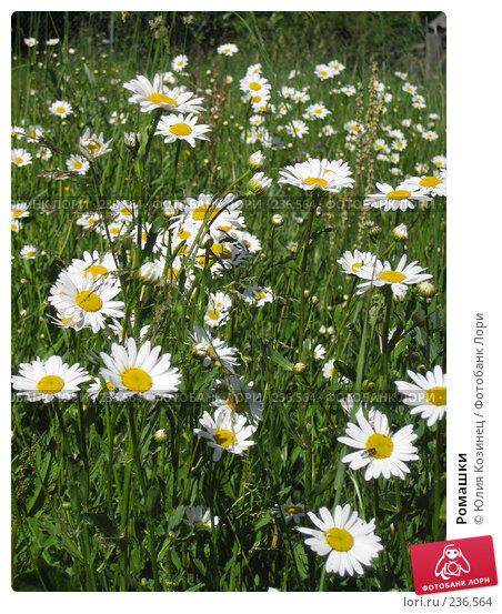 Купить «Ромашки», фото № 236564, снято 11 июня 2007 г. (c) Юлия Козинец / Фотобанк Лори