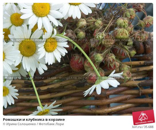 Ромашки и клубника в корзине, фото № 35688, снято 23 июля 2006 г. (c) Ирина Солошенко / Фотобанк Лори