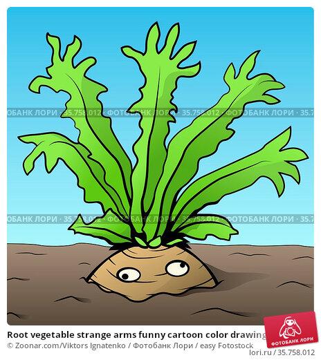 Root vegetable strange arms funny cartoon color drawing, vector illustration... Стоковое фото, фотограф Zoonar.com/Viktors Ignatenko / easy Fotostock / Фотобанк Лори