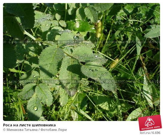 Роса на листе шиповника, фото № 6696, снято 27 июля 2006 г. (c) Минакова Татьяна / Фотобанк Лори