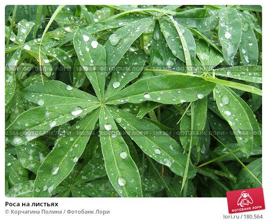 Купить «Роса на листьях», фото № 180564, снято 13 сентября 2007 г. (c) Корчагина Полина / Фотобанк Лори
