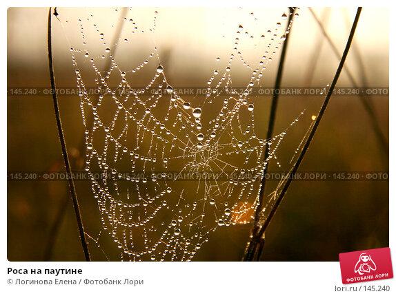 Роса на паутине, фото № 145240, снято 27 августа 2006 г. (c) Логинова Елена / Фотобанк Лори