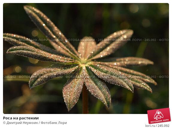 Роса на растении, эксклюзивное фото № 245092, снято 16 января 2017 г. (c) Дмитрий Неумоин / Фотобанк Лори