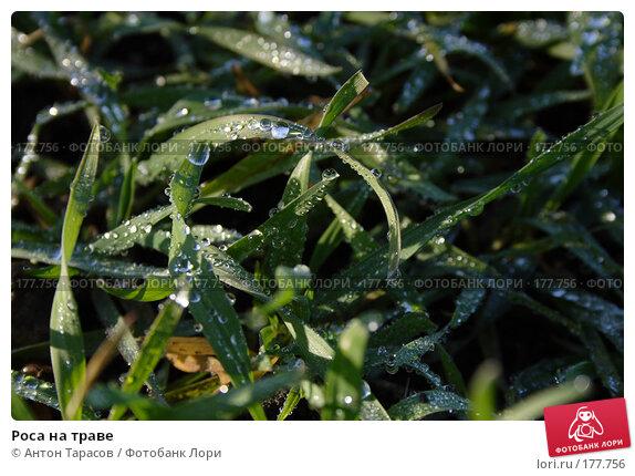 Роса на траве, фото № 177756, снято 21 августа 2017 г. (c) Антон Тарасов / Фотобанк Лори