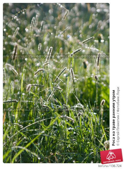 Роса на траве ранним утром, фото № 136724, снято 29 июля 2007 г. (c) Сергей Плахотин / Фотобанк Лори