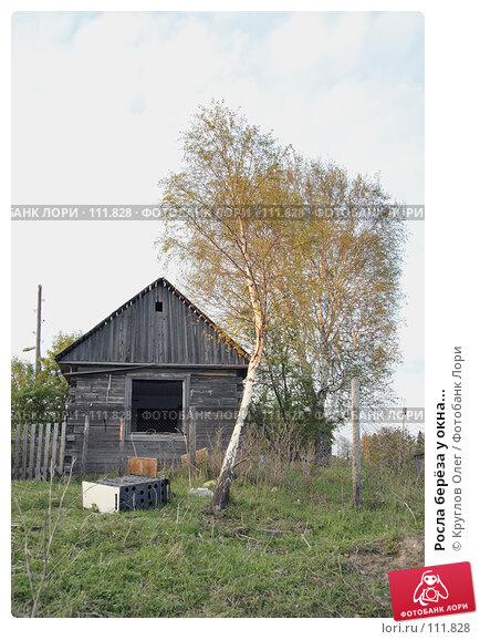 Росла берёза у окна..., эксклюзивное фото № 111828, снято 5 июня 2007 г. (c) Круглов Олег / Фотобанк Лори