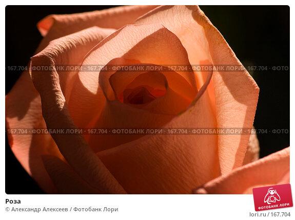 Роза, эксклюзивное фото № 167704, снято 13 мая 2007 г. (c) Александр Алексеев / Фотобанк Лори