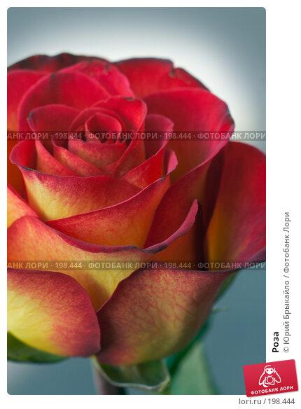 Купить «Роза», фото № 198444, снято 3 февраля 2008 г. (c) Юрий Брыкайло / Фотобанк Лори