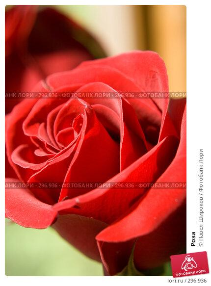 Купить «Роза», эксклюзивное фото № 296936, снято 17 мая 2008 г. (c) Павел Широков / Фотобанк Лори