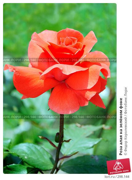Роза алая на зелёном фоне, фото № 298144, снято 24 мая 2008 г. (c) Федор Королевский / Фотобанк Лори