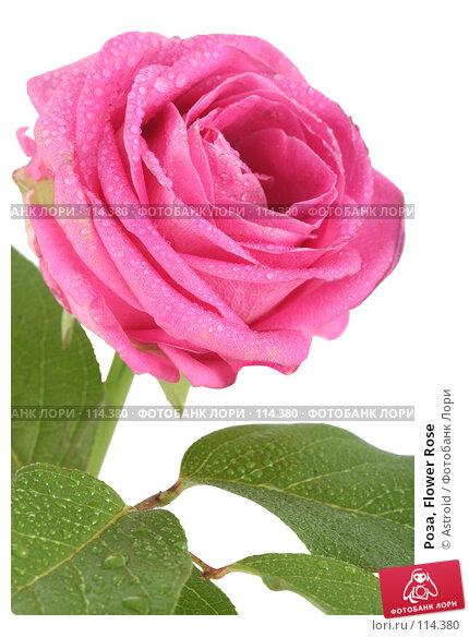 Роза, Flower Rose, фото № 114380, снято 14 апреля 2007 г. (c) Astroid / Фотобанк Лори