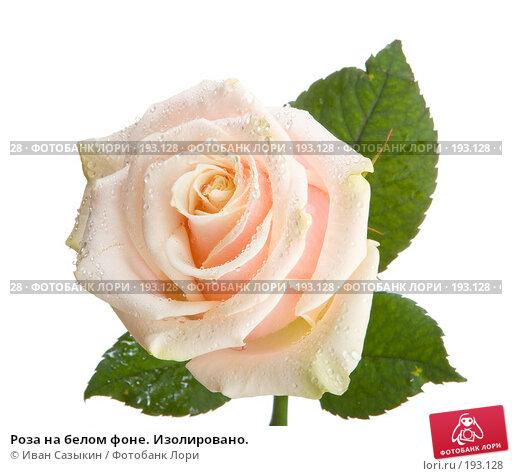 Роза на белом фоне. Изолировано., фото № 193128, снято 30 января 2008 г. (c) Иван Сазыкин / Фотобанк Лори