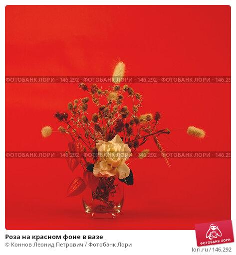Роза на красном фоне в вазе, фото № 146292, снято 13 декабря 2007 г. (c) Коннов Леонид Петрович / Фотобанк Лори