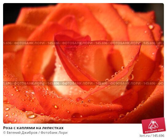 Роза с каплями на лепестках, фото № 145696, снято 27 ноября 2007 г. (c) Лысых Константин / Фотобанк Лори