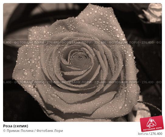 Роза (сепия), фото № 276400, снято 8 августа 2007 г. (c) Примак Полина / Фотобанк Лори