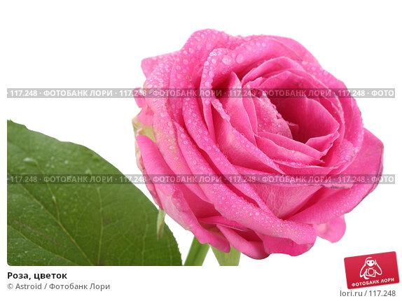 Роза, цветок, фото № 117248, снято 14 апреля 2007 г. (c) Astroid / Фотобанк Лори