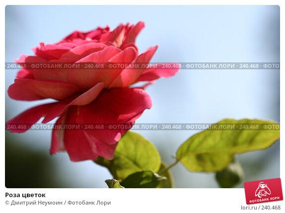 Роза цветок, эксклюзивное фото № 240468, снято 7 сентября 2004 г. (c) Дмитрий Неумоин / Фотобанк Лори