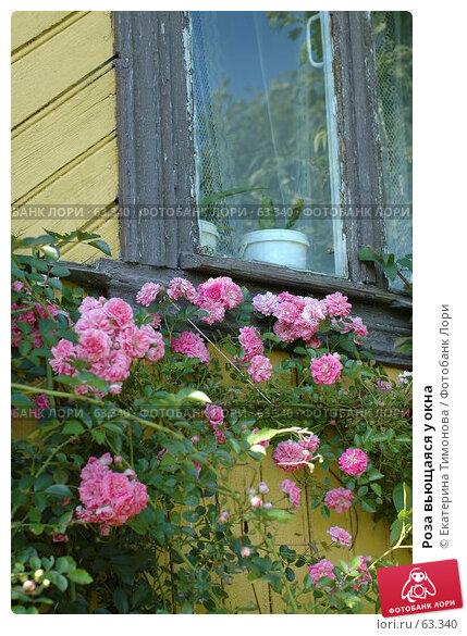 Роза вьющаяся у окна, фото № 63340, снято 18 июля 2007 г. (c) Екатерина Тимонова / Фотобанк Лори